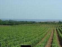 Úton Spanyolország felé - szőlőföldek