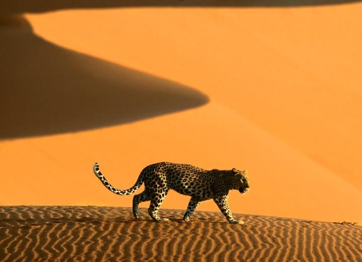 Legjobb ár-értékarányú úti célok 2017-re - Namíbia, Afrika