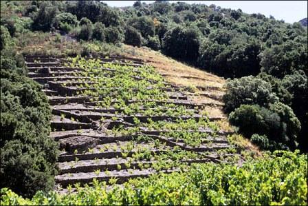 Úton Spanyolország felé - Banyuls-sur-Mer, teraszos szőlőföldek