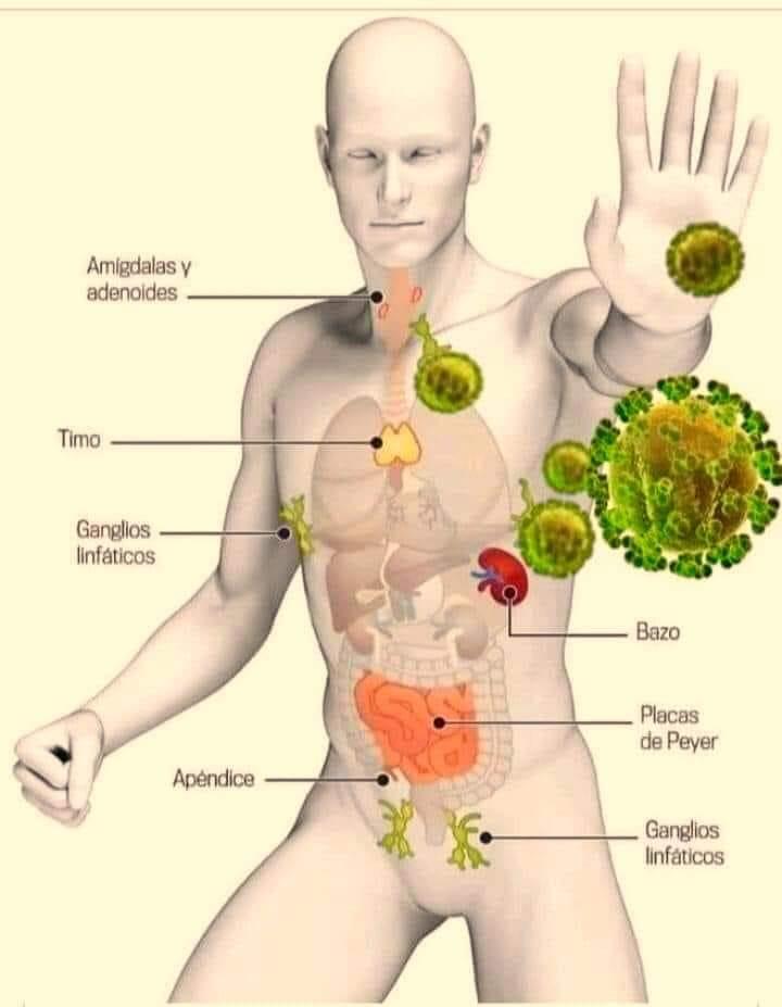 karanten lakoautoban immunrendszer